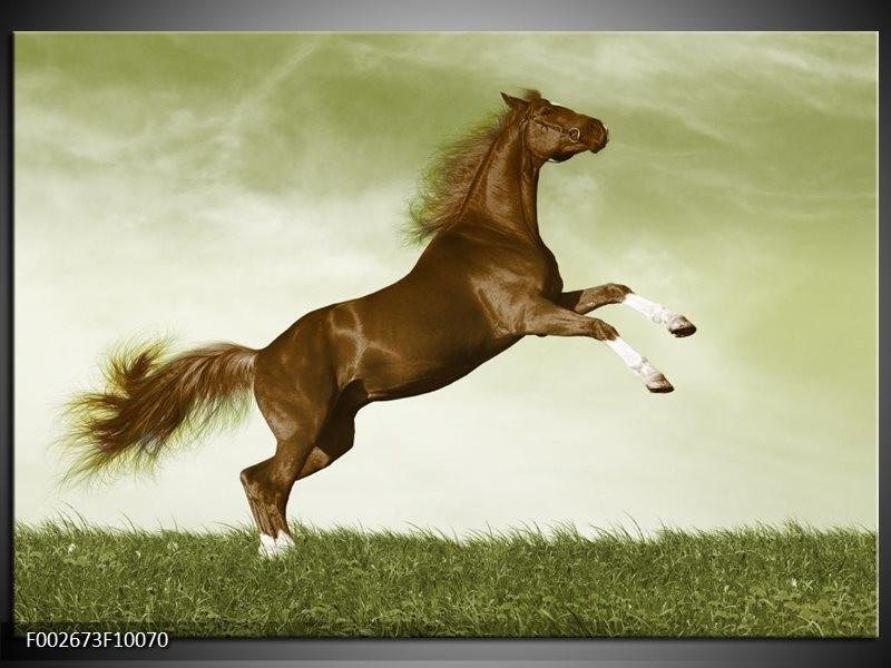 Foto canvas schilderij Paard | Bruin, Groen, Zwart