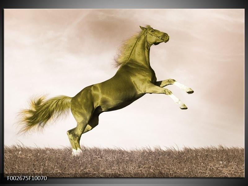 Foto canvas schilderij Paard   Sepia, Groen, Goud