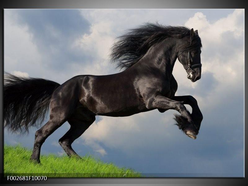 Foto canvas schilderij Paard | Zwart, Groen, Wit