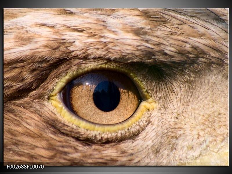 Foto canvas schilderij Vogel | Bruin, Geel, Zwart