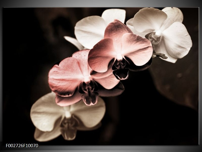 Foto canvas schilderij Orchidee   Bruin, Zwart, Grijs