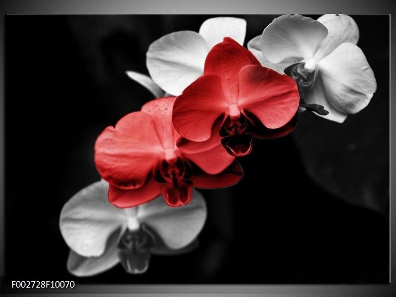 Foto canvas schilderij Orchidee   Rood, Zwart, Grijs