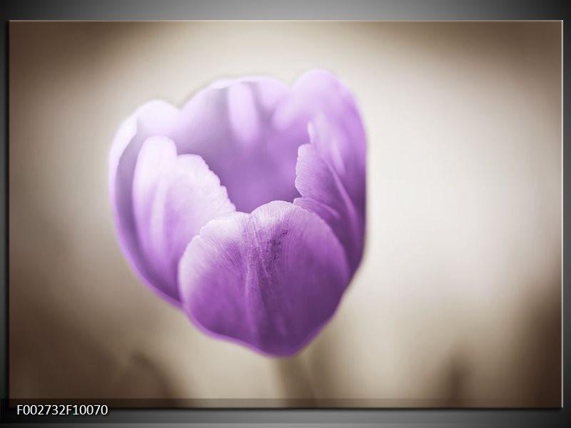 Foto canvas schilderij Tulp | Paars, Grijs, Wit