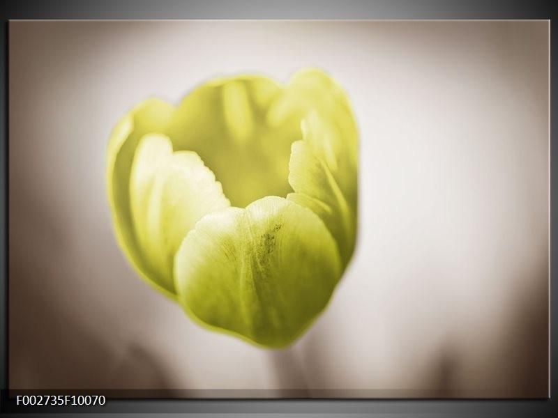 Foto canvas schilderij Tulp | Groen, Bruin, Wit