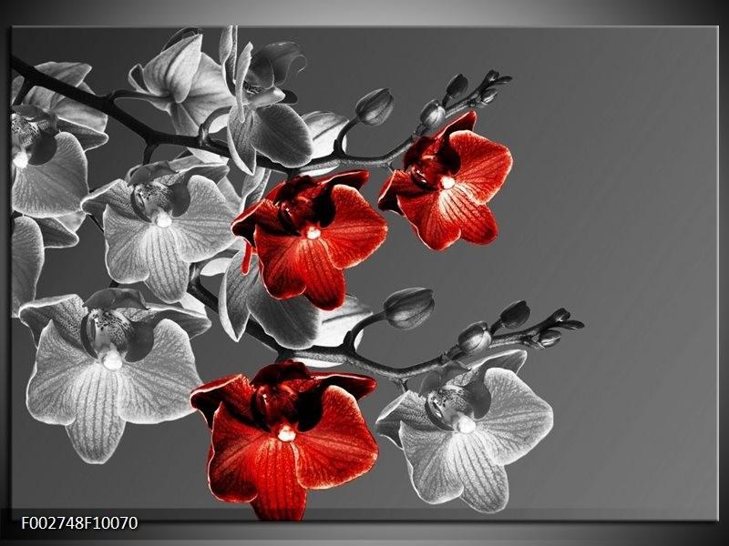 Foto canvas schilderij Orchidee | Zwart, Rood, Grijs