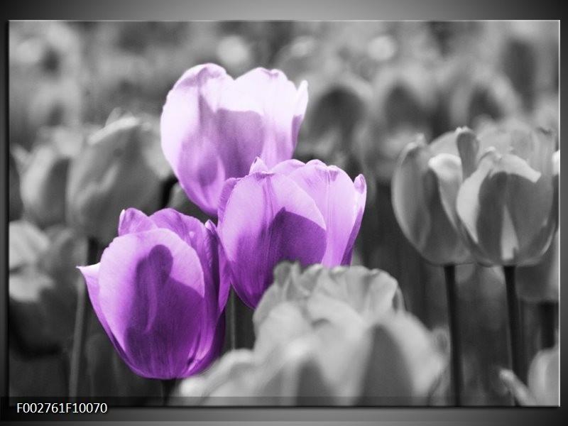 Foto canvas schilderij Tulpen | Paars, Grijs, Zwart