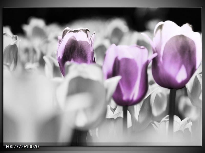 Foto canvas schilderij Tulpen | Paars, Grijs, Wit