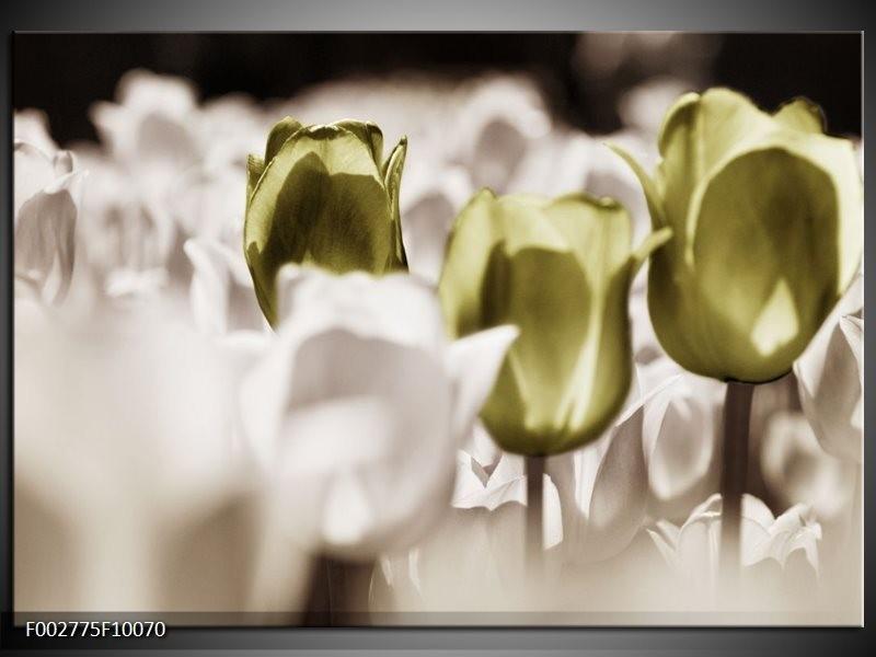 Foto canvas schilderij Tulpen | Bruin, Groen, Wit