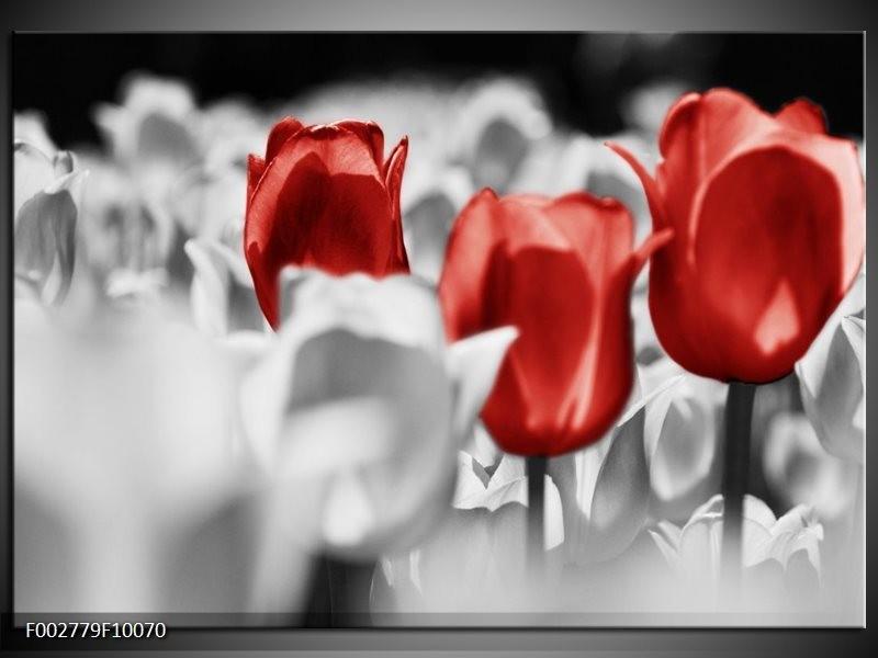 Foto canvas schilderij Tulpen | Rood, Grijs, Wit