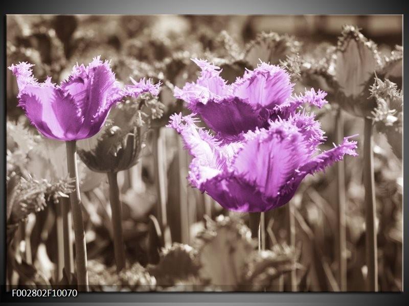 Foto canvas schilderij Tulpen   Paars, Bruin, Grijs