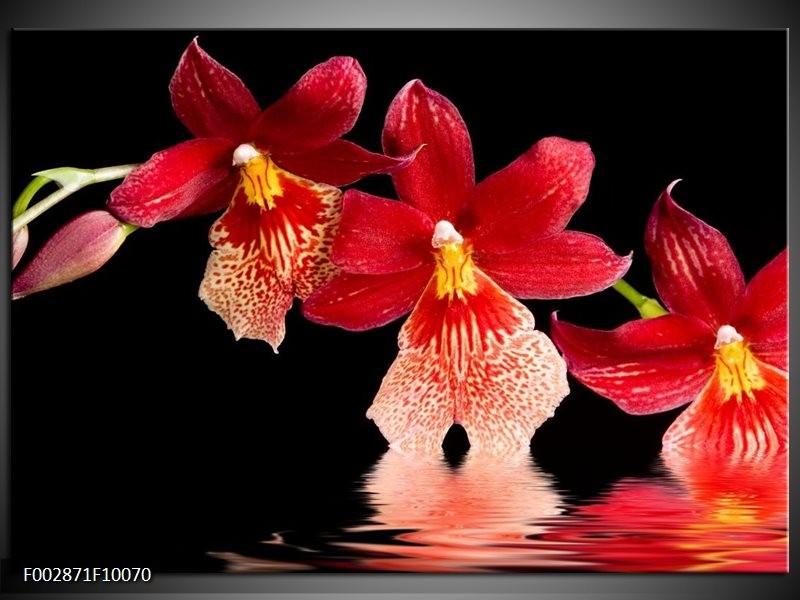 Foto canvas schilderij Orchidee | Rood, Zwart, Wit