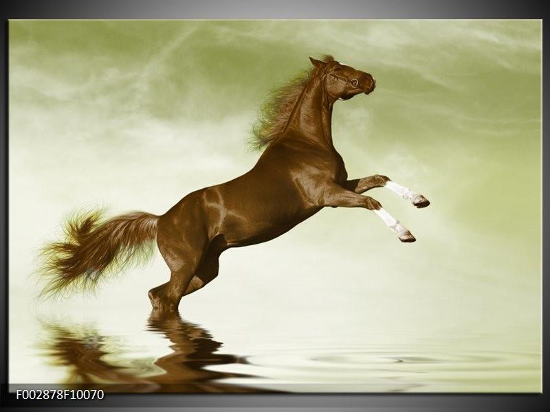 Foto canvas schilderij Paard | Groen, Bruin