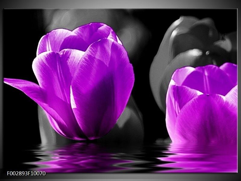 Foto canvas schilderij Tulpen | Paars, Zwart, Grijs