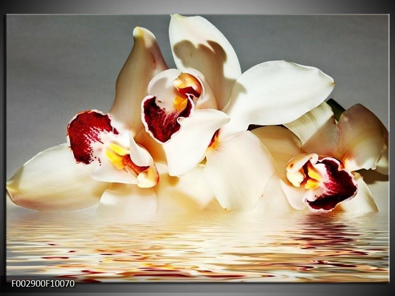 Foto canvas schilderij Orchidee | Wit, Grijs, Rood