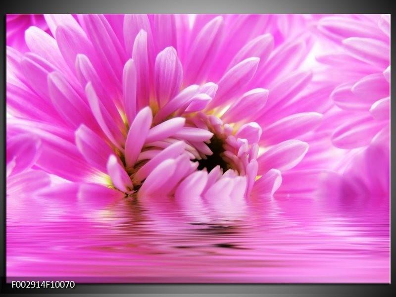 Foto canvas schilderij Bloem | Roze, Wit