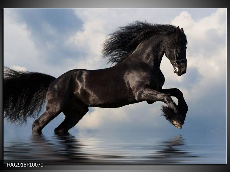 Foto canvas schilderij Paard | Zwart, Blauw, Wit