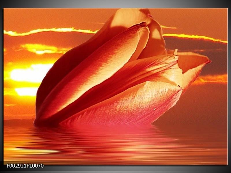 Foto canvas schilderij Tulpen | Rood, Oranje, Geel