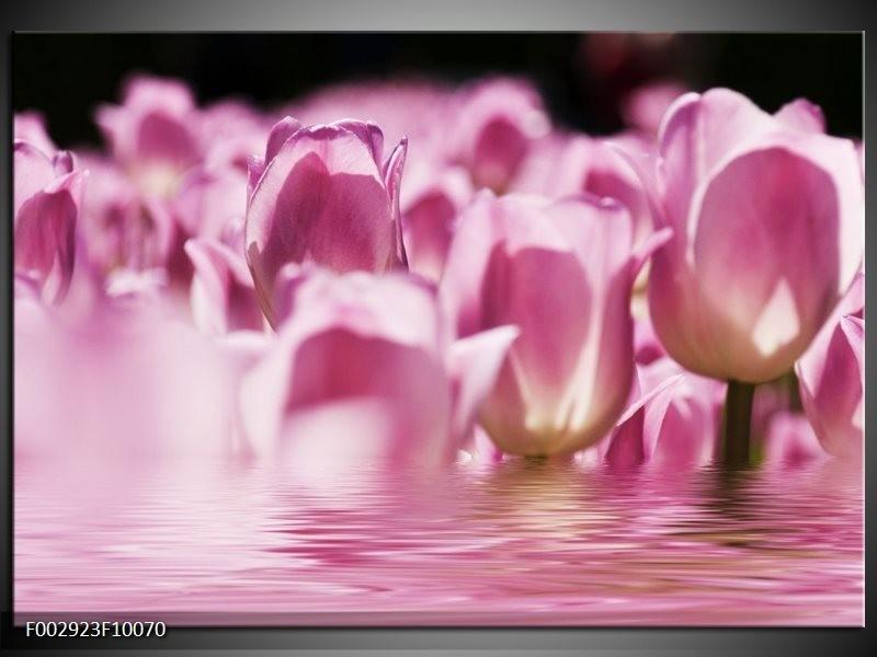 Foto canvas schilderij Tulpen   Paars, Wit