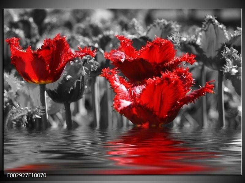 Foto canvas schilderij Tulpen | Zwart, Rood, Grijs