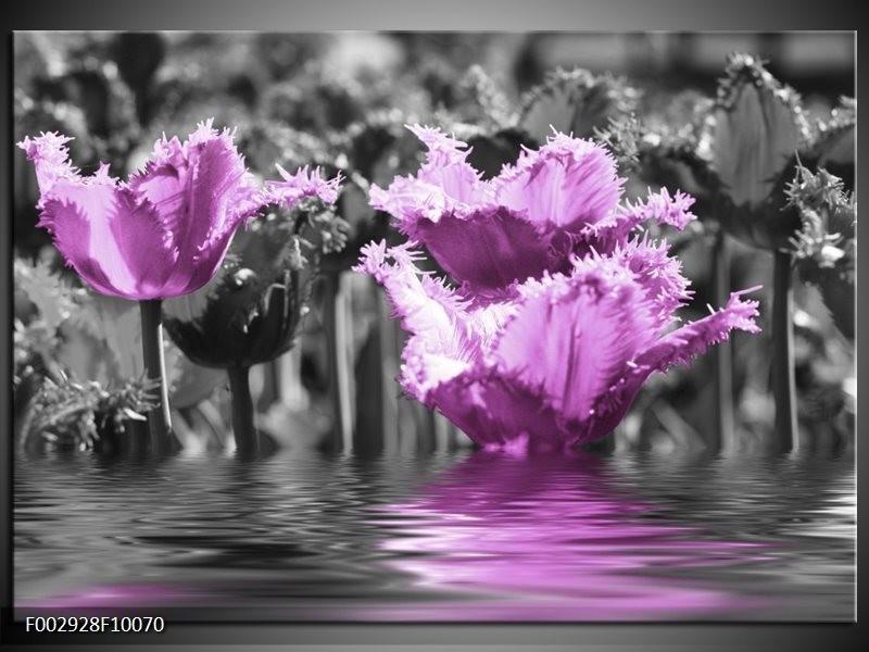 Foto canvas schilderij Tulpen | Zwart, Paars, Grijs