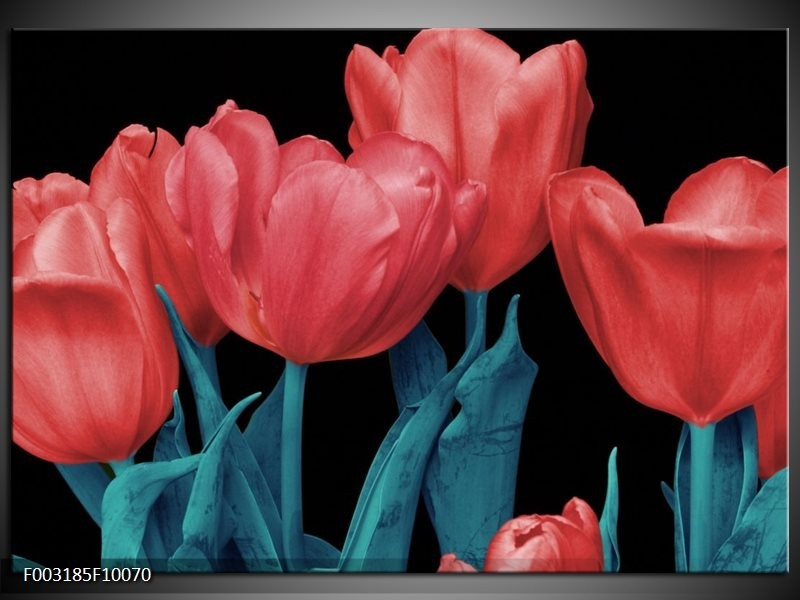 Foto canvas schilderij Tulpen | Rood, Blauw, Zwart