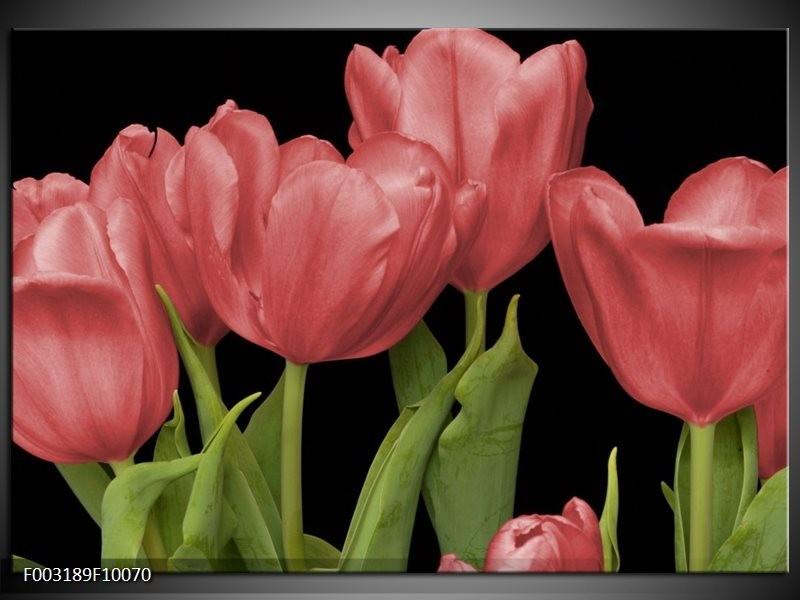 Foto canvas schilderij Tulpen | Rood, Groen, Zwart