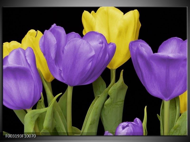 Foto canvas schilderij Tulpen | Paars, Geel, Groen