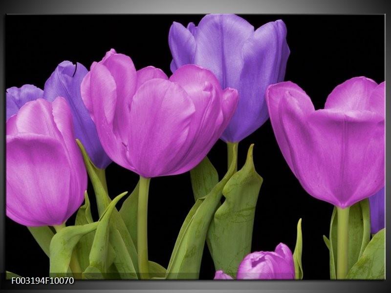 Foto canvas schilderij Tulpen | Paars, Blauw, Groen