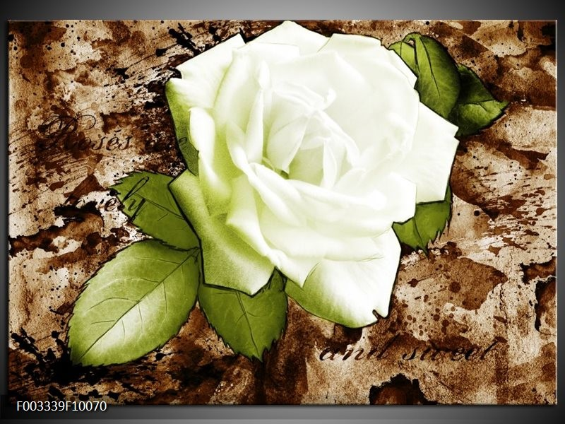 Foto canvas schilderij Roos | Bruin, Wit, Groen