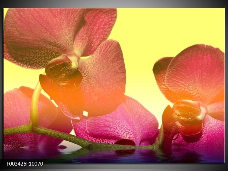 Glas schilderij Orchidee | Geel, Roze, Paars
