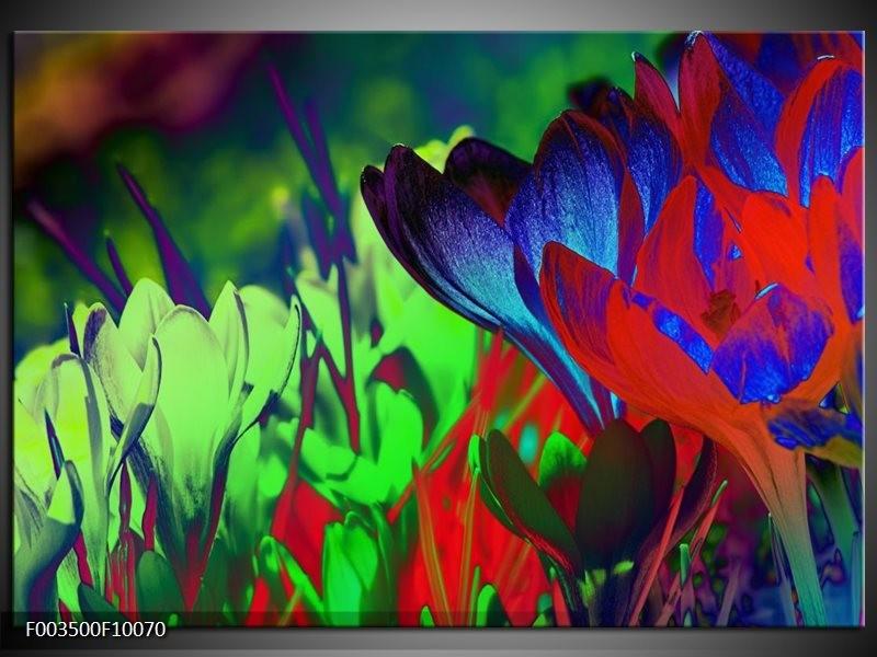Foto canvas schilderij Krokus | Blauw, Groen, Rood
