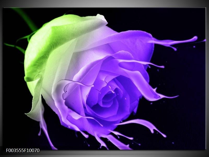 Glas schilderij Roos | Paars, Groen, Zwart