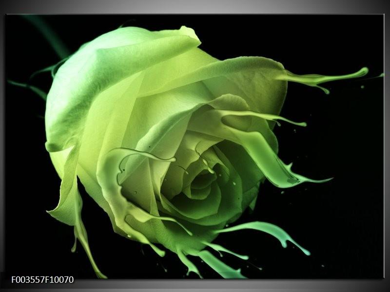Foto canvas schilderij Roos | Groen, Zwart,