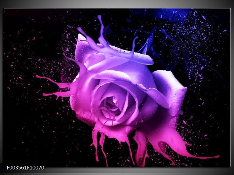 Foto canvas schilderij Roos | Roze, Paars, Blauw