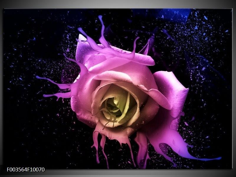 Glas schilderij Roos   Paars, Roze, Zwart