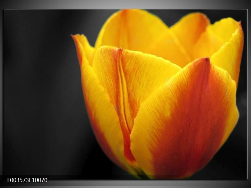 Glas schilderij Tulp | Geel, Oranje, Zwart