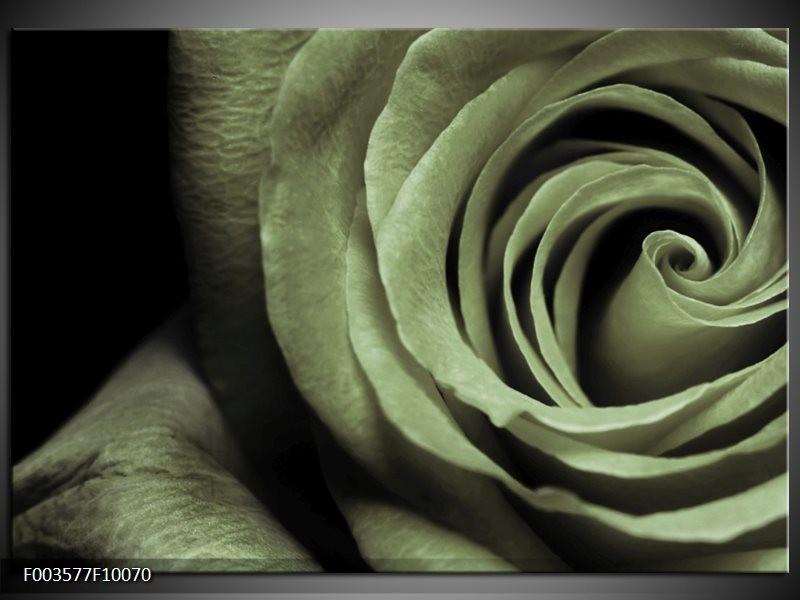 Foto canvas schilderij Roos | Groen, Grijs, Zwart