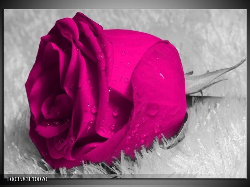 Glas schilderij Roos   Roze, Grijs