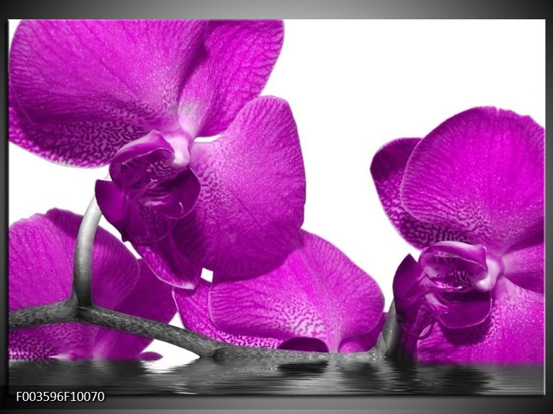 Glas schilderij Orchidee | Paars, Wit