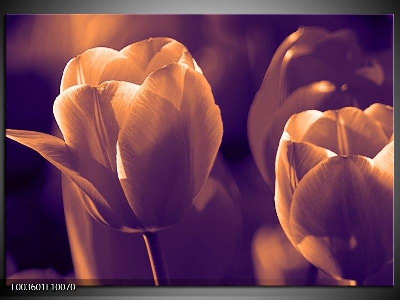 Foto canvas schilderij Tulp | Bruin, Wit