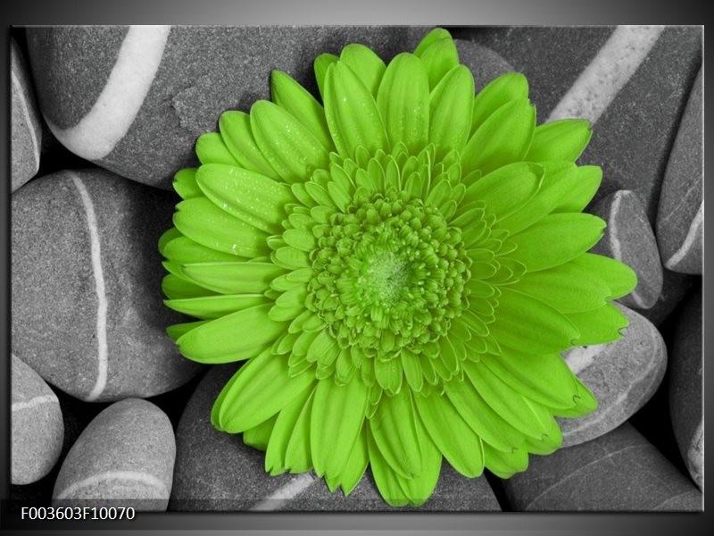 Foto canvas schilderij Bloem | Groen, Grijs