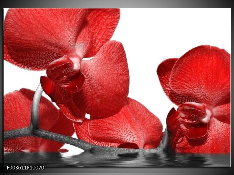 Glas schilderij Orchidee | Rood, Wit