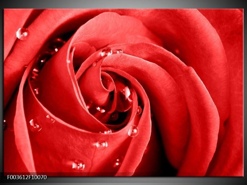 Glas schilderij Roos   Rood, Wit