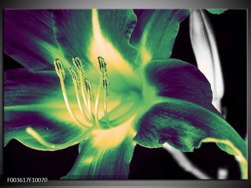 Glas schilderij Bloem | Zwart, Groen, Grijs