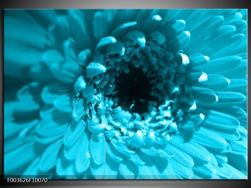 Foto canvas schilderij Gerbera | Blauw, Zwart, Wit