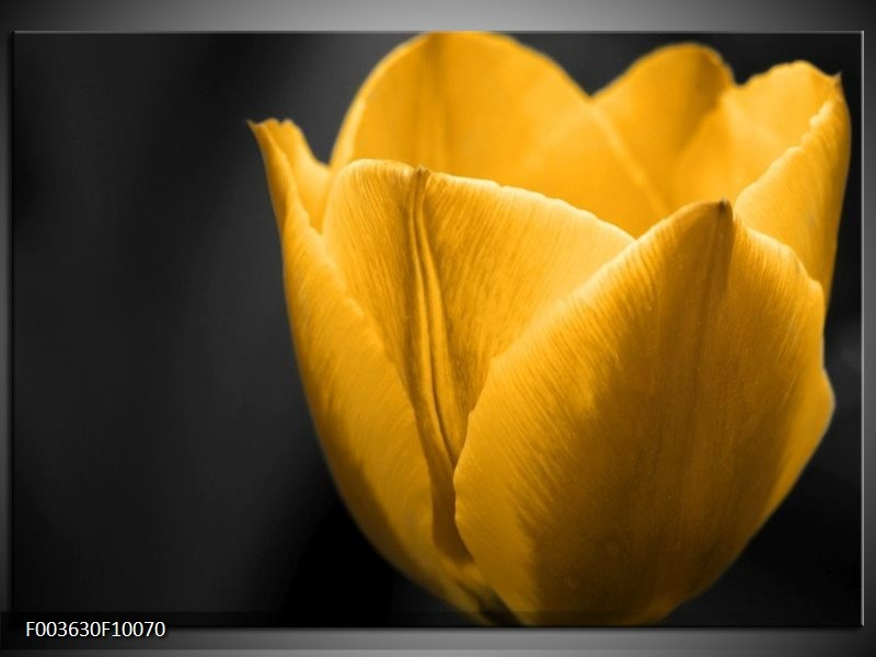 Glas schilderij Tulp   Geel, Zwart