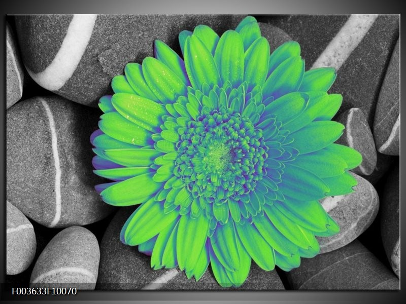 Glas schilderij Gerbera | Groen, Grijs