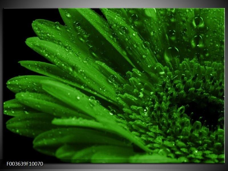 Glas schilderij Gerber | Groen, Zwart