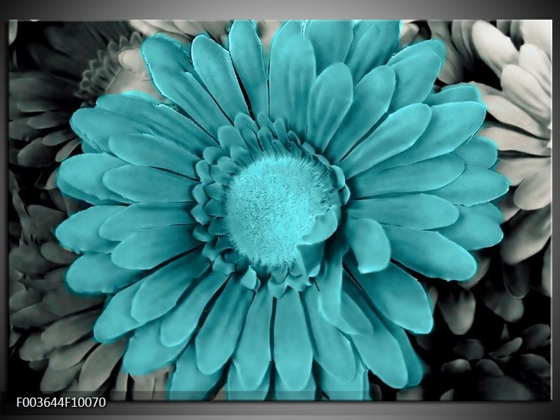 Glas schilderij Gerbera   Blauw, Grijs