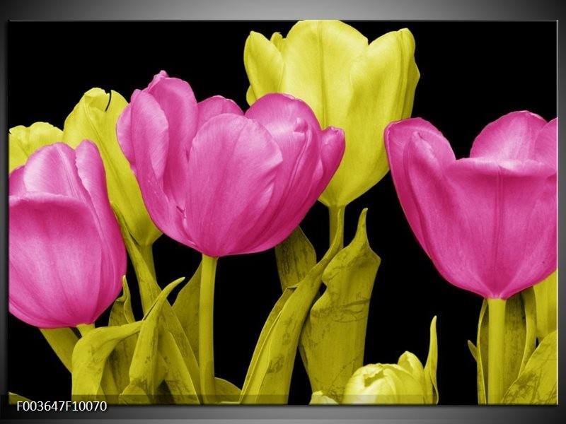 Foto canvas schilderij Tulp | Roze, Geel, Zwart